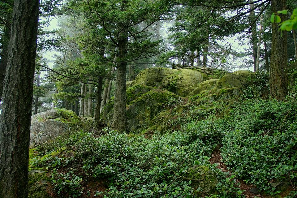 Old Soul | A Poem from Water, Rocks and Trees