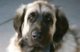 Dog by James Scott Smith