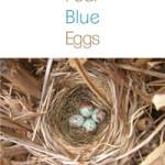 Four_Blue_eggs_cov_web