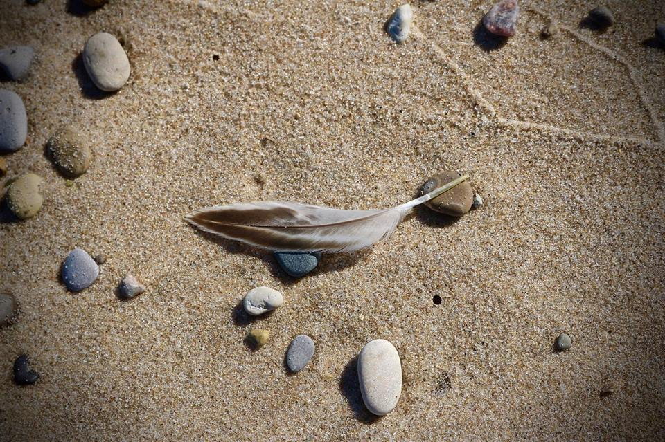 The Shore | A Poem from Water, Rocks and Trees
